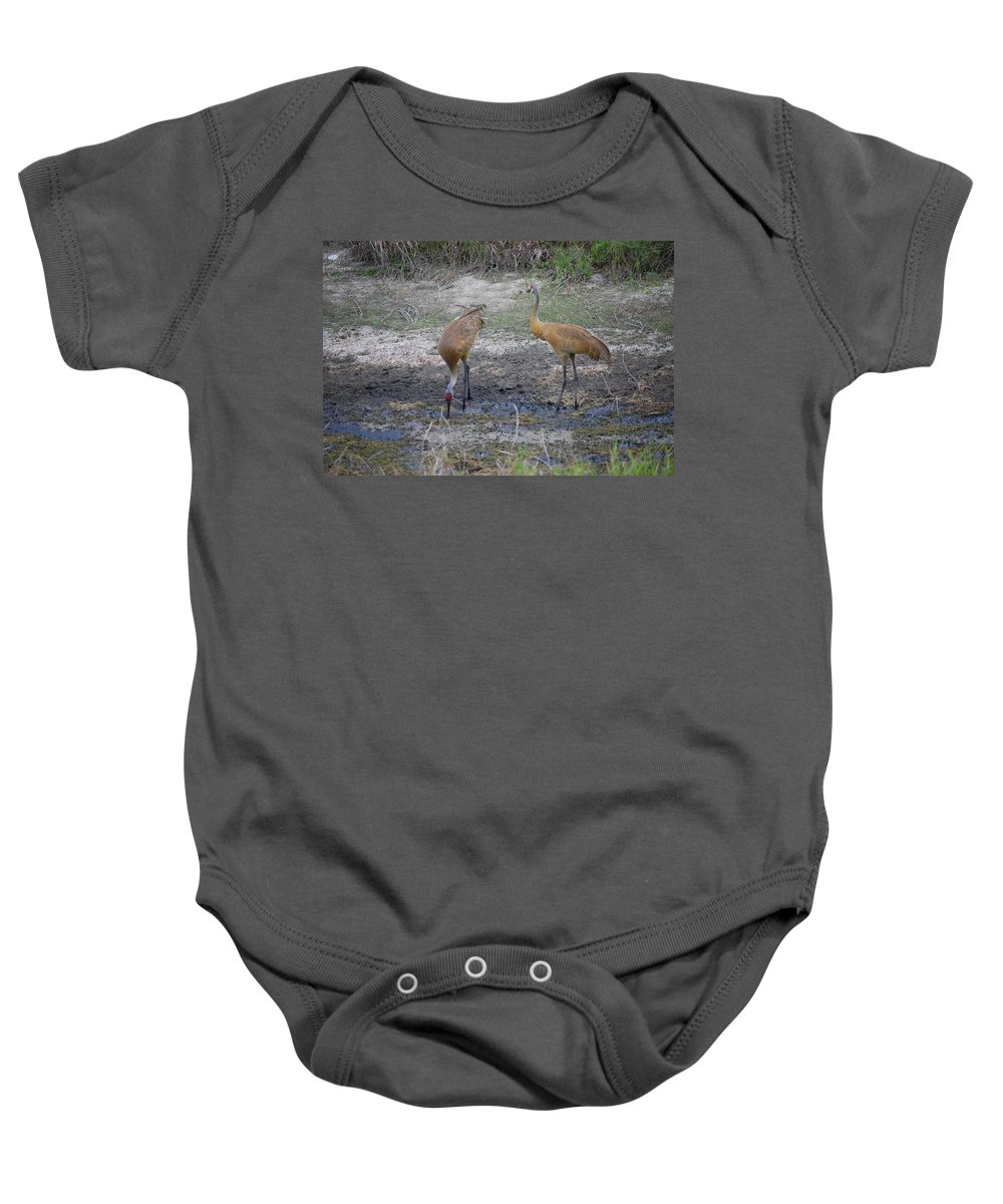 Feeding Baby Onesie featuring the photograph Sandhill Stork by Robert Floyd