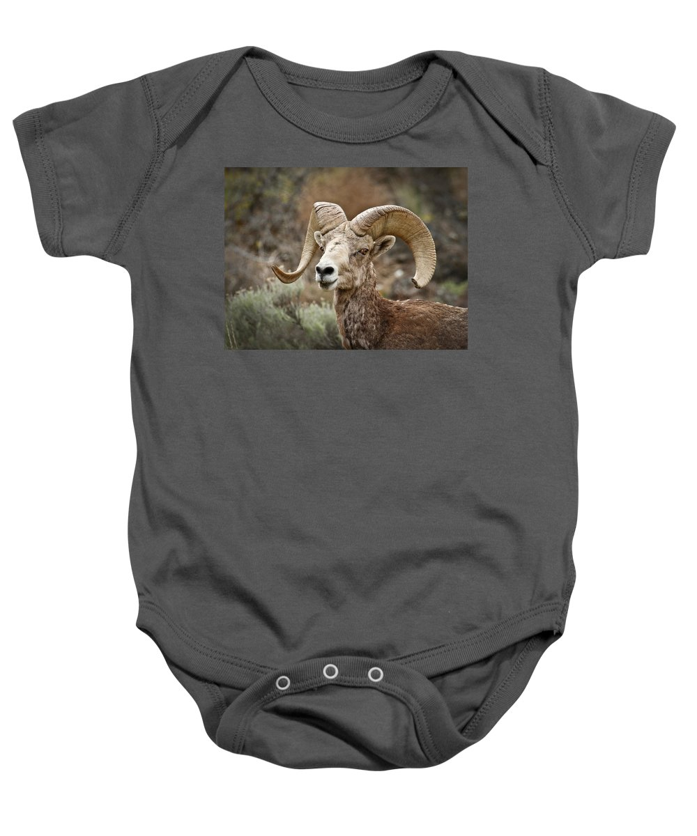 Bighorn Sheep Baby Onesie featuring the photograph The Bighorn by Steve McKinzie