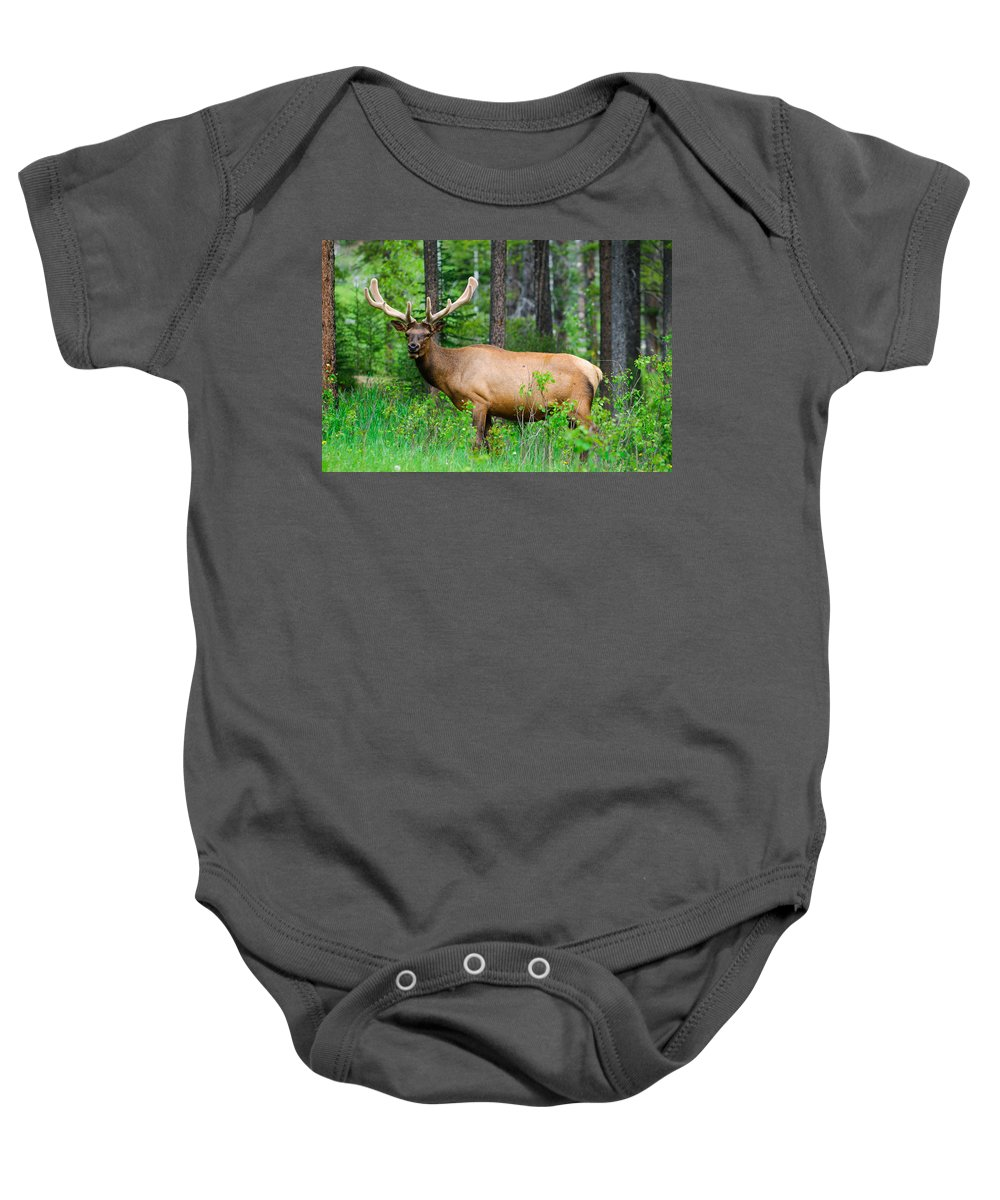 Adult Baby Onesie featuring the photograph Wild Bull Elk by Brandon Smith