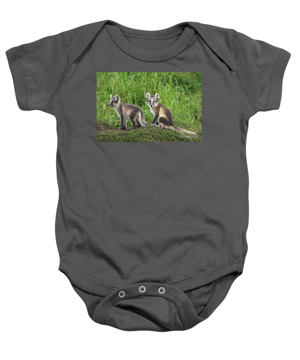 Arctic Fox Baby Onesie featuring the photograph 120223p090 by Arterra Picture Library