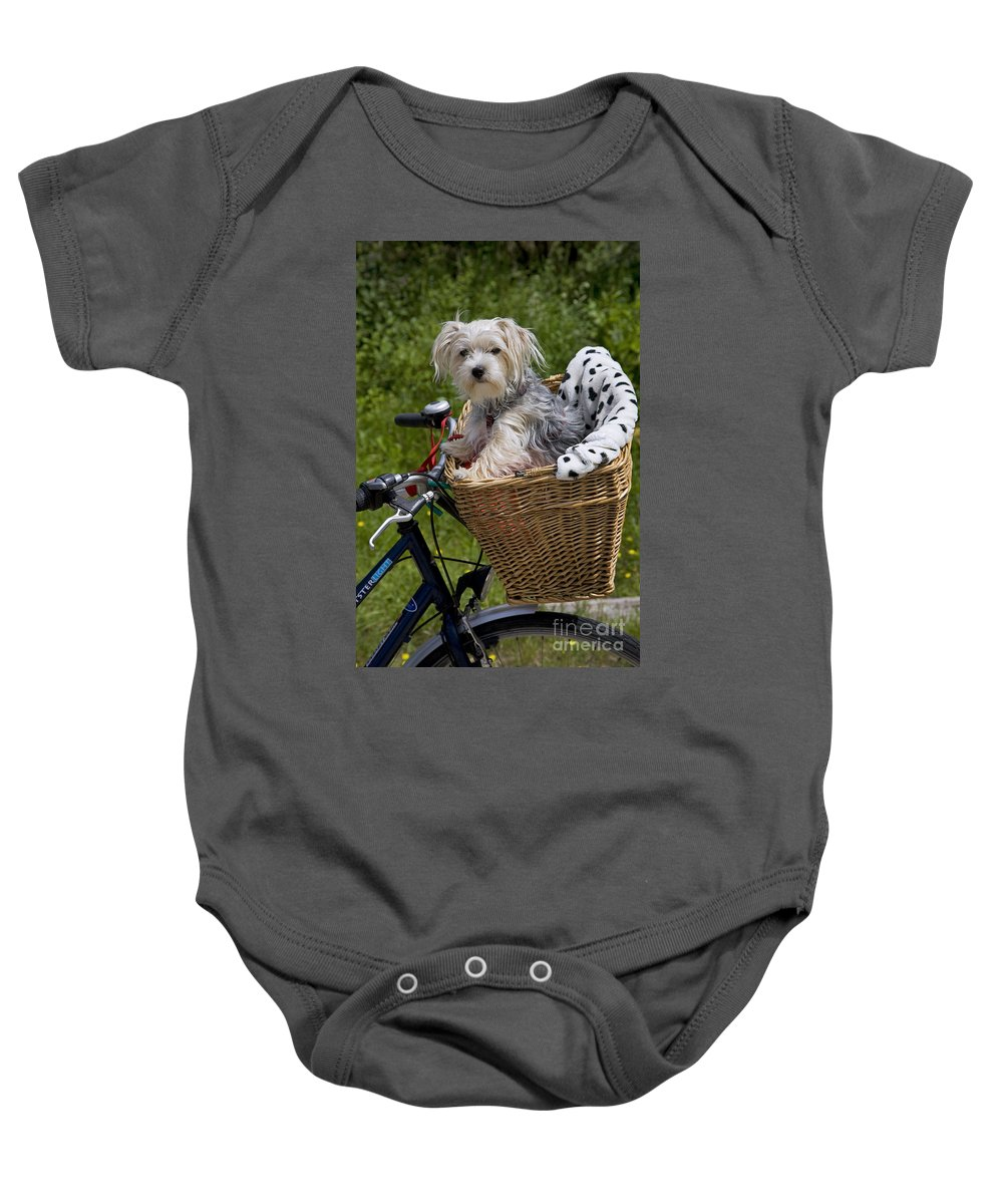 Yorkshire Terrier Baby Onesie featuring the photograph 120223p264 by Arterra Picture Library