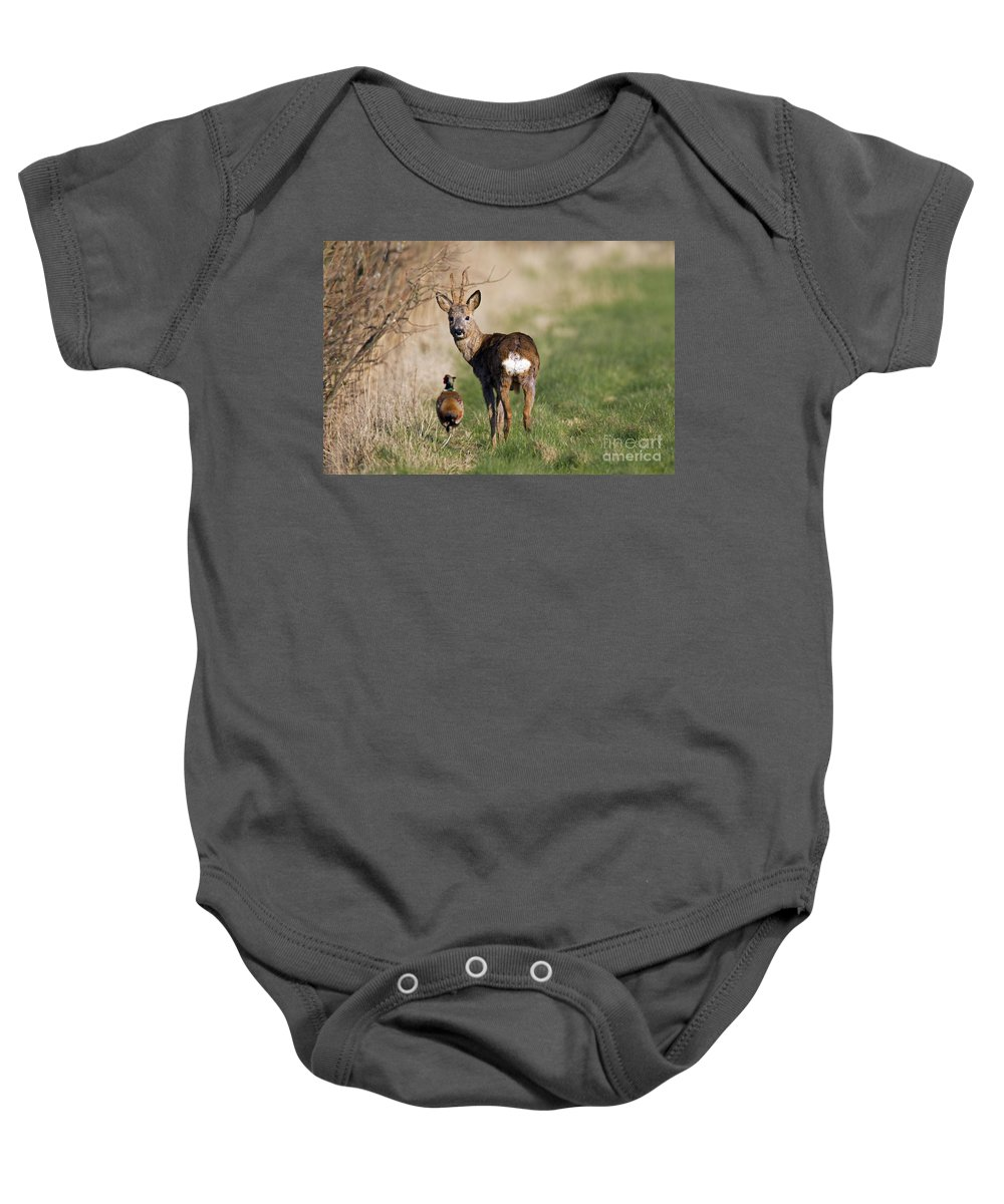 Common Pheasant Baby Onesie featuring the photograph 130201p187 by Arterra Picture Library