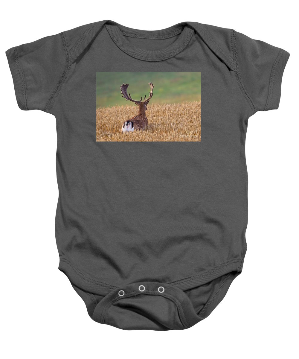 Fallow Deer Baby Onesie featuring the photograph 130201p294 by Arterra Picture Library
