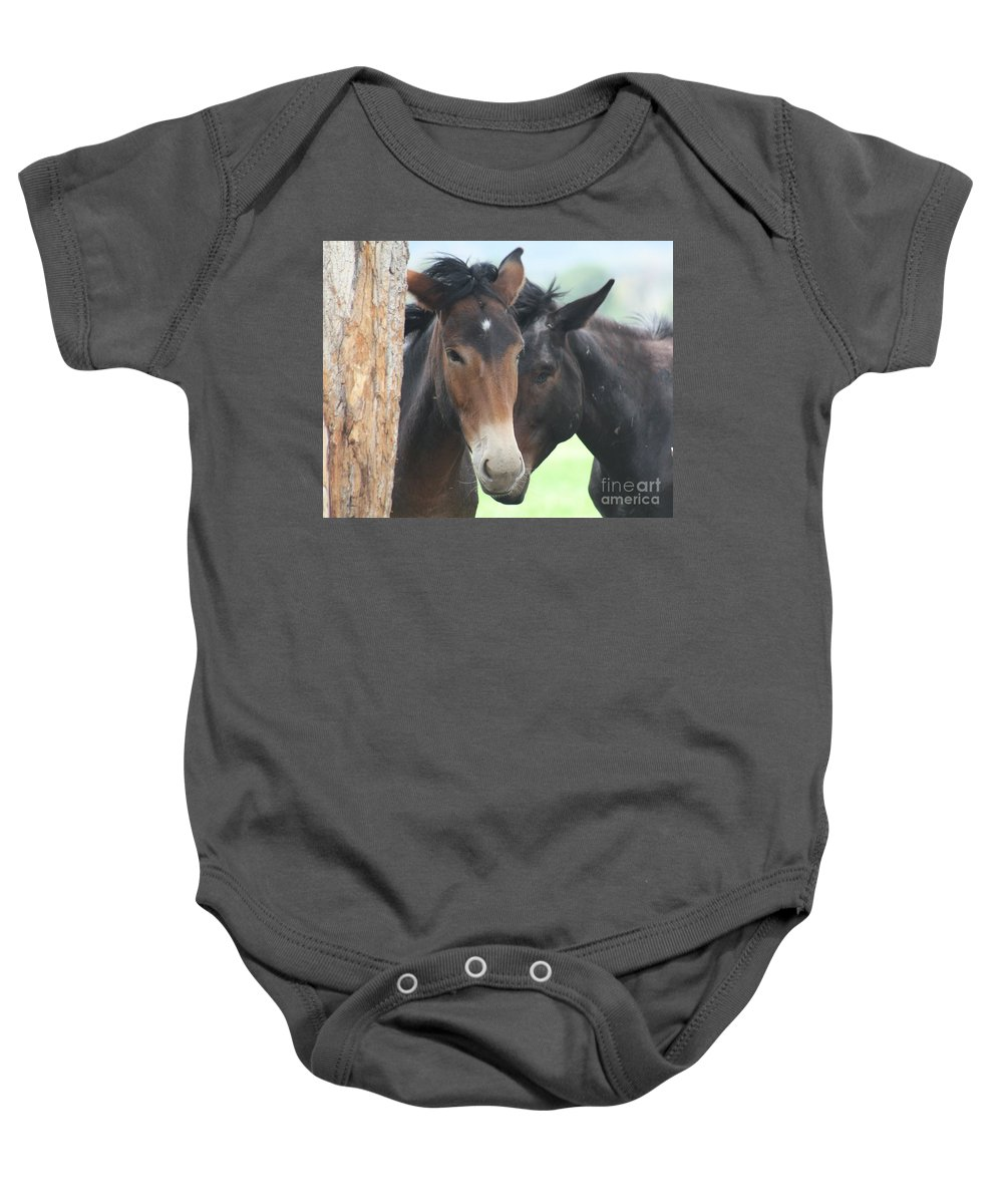 Horses Baby Onesie featuring the photograph Buddies by Brandi Maher