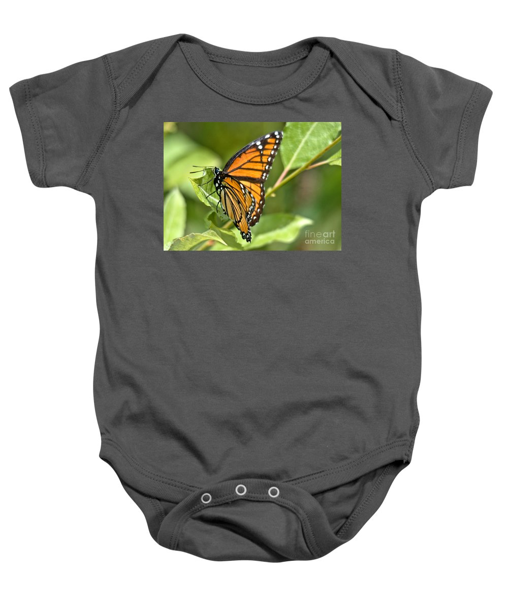 Monarch Baby Onesie featuring the photograph Busy Butterfly by Cheryl Baxter