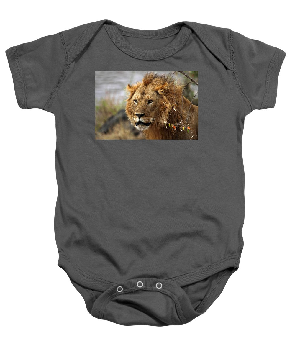 Lion Baby Onesie featuring the photograph Large Male Lion Emerging From The Bush by Carole-Anne Fooks
