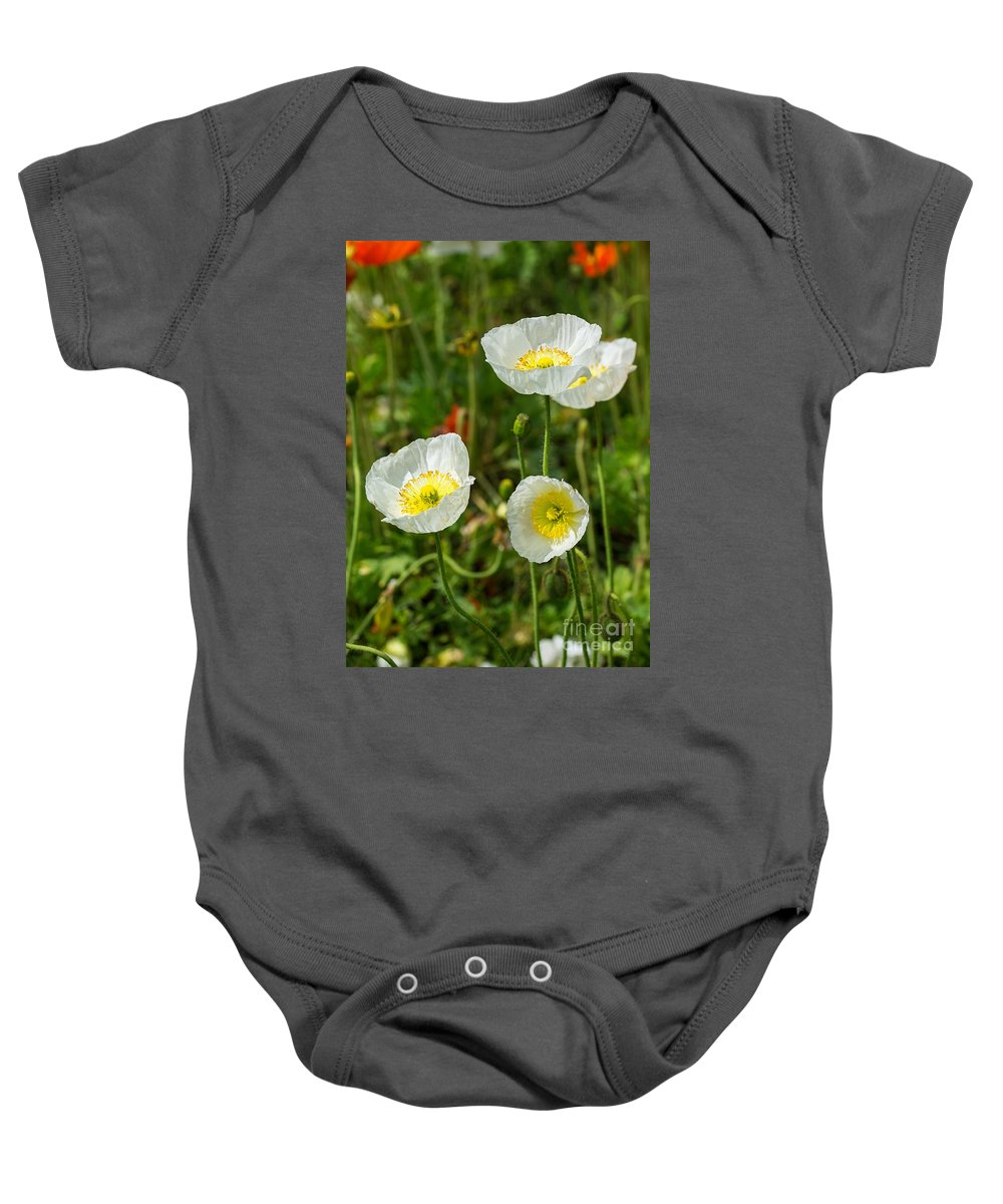 White Iceland Poppy Baby Onesie featuring the photograph White Iceland Poppy - Beautiful Spring Poppy Flowers In Bloom. by Jamie Pham