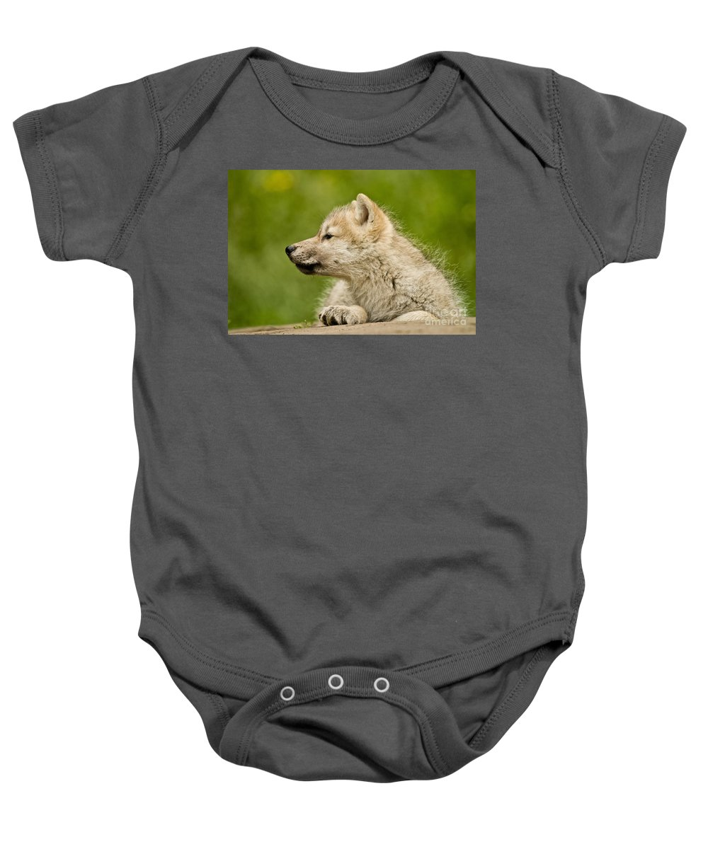 Michael Cummings Baby Onesie featuring the photograph Arctic Wolf Pup by Michael Cummings