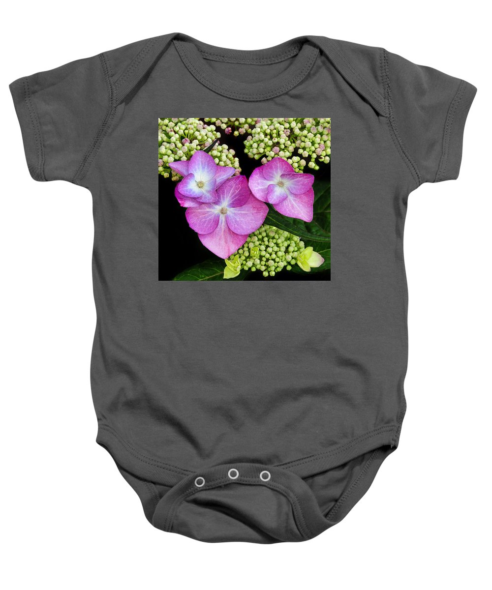 Hydrangea Baby Onesie featuring the photograph Hydrangea by Dave Mills