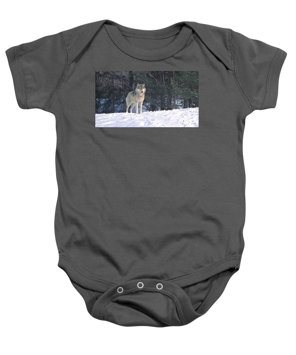 Timber Baby Onesie featuring the photograph Timber Wolf by Les Palenik