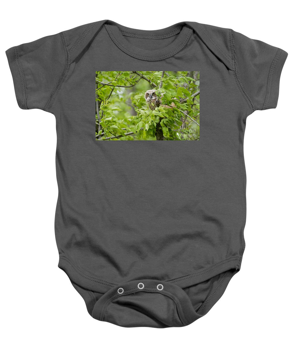 Michael Cummings Baby Onesie featuring the photograph Great Horned Owlet by Michael Cummings