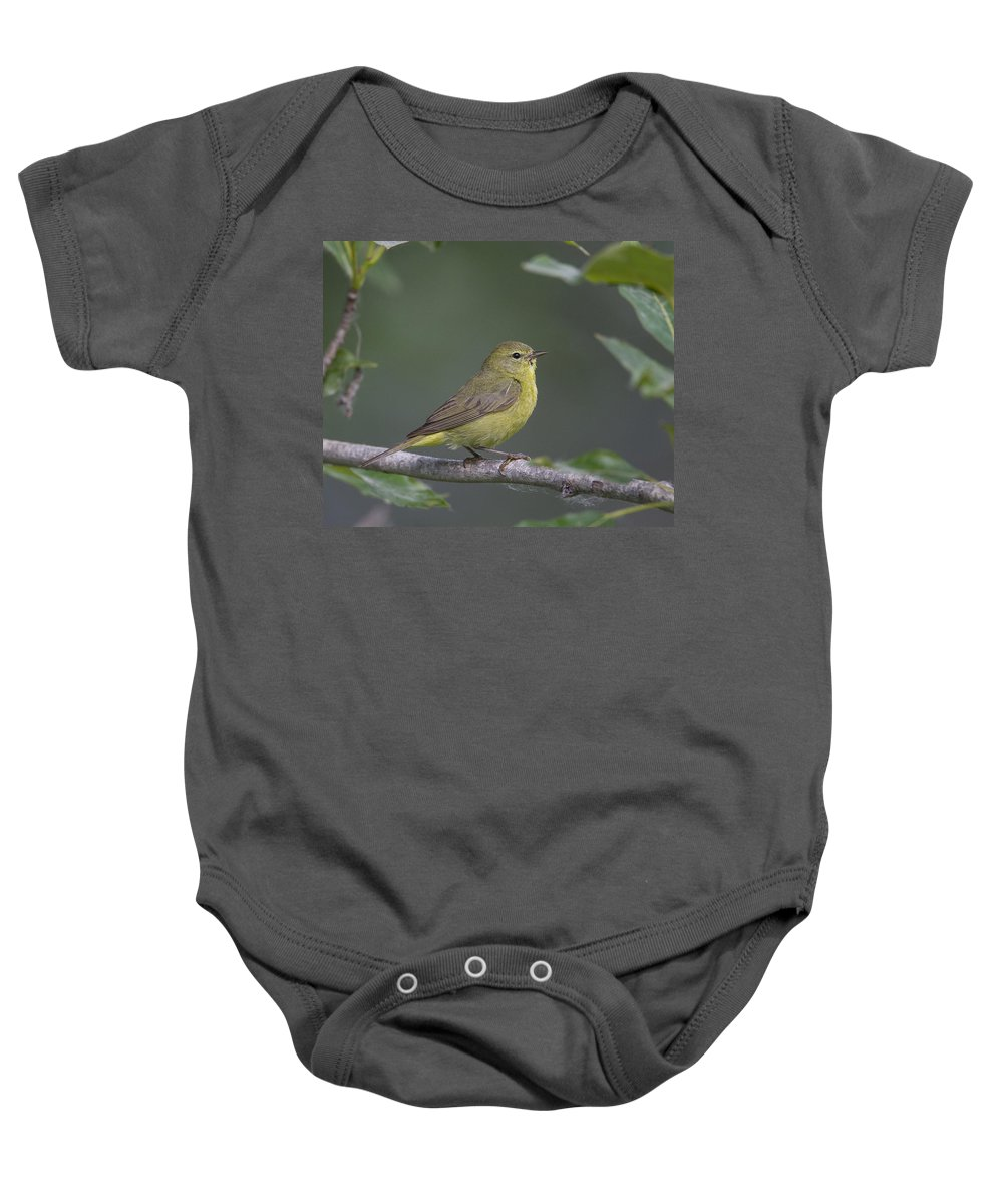 Doug Lloyd Baby Onesie featuring the photograph Orangecrowned Warbler by Doug Lloyd