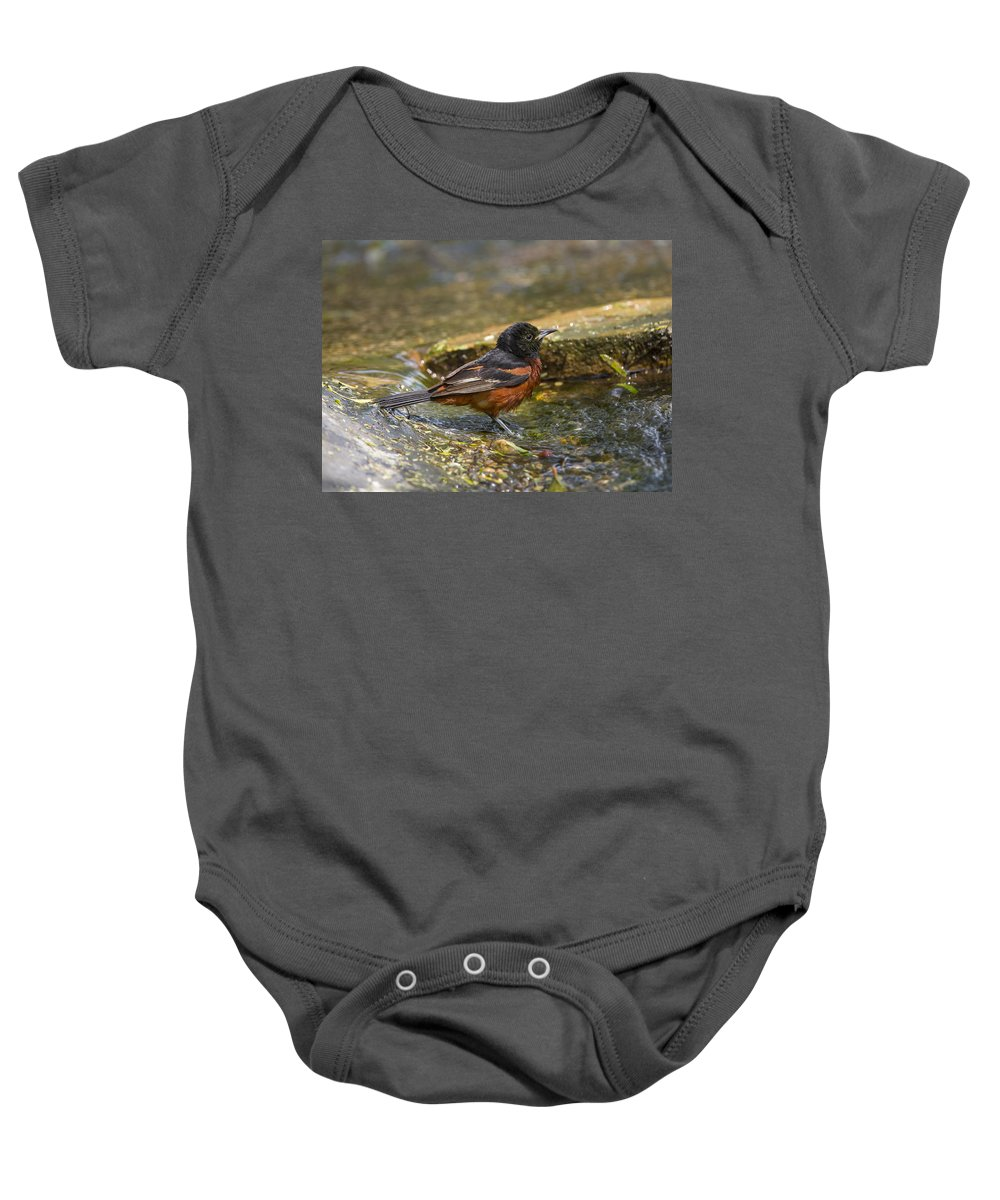 Doug Lloyd Baby Onesie featuring the photograph Baltimore Oriole by Doug Lloyd