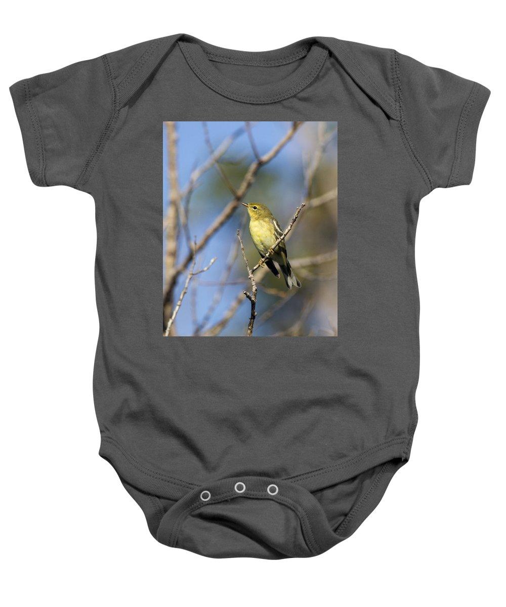 Doug Lloyd Baby Onesie featuring the photograph Blackpoll Warbler by Doug Lloyd