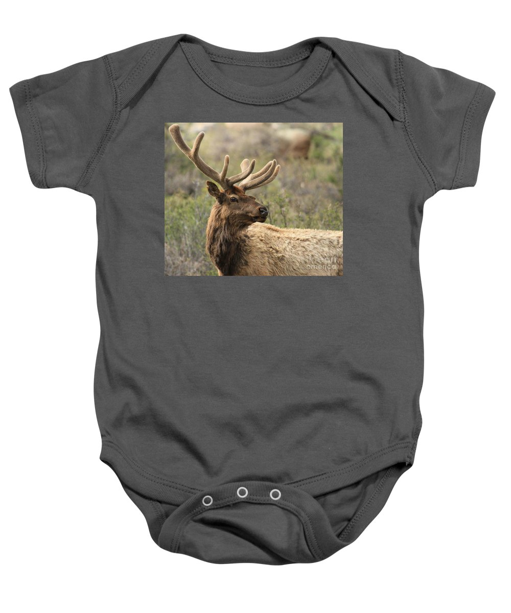 Rocky Mountain National Park Baby Onesie featuring the photograph A Beautiful Young Rack by Adam Jewell
