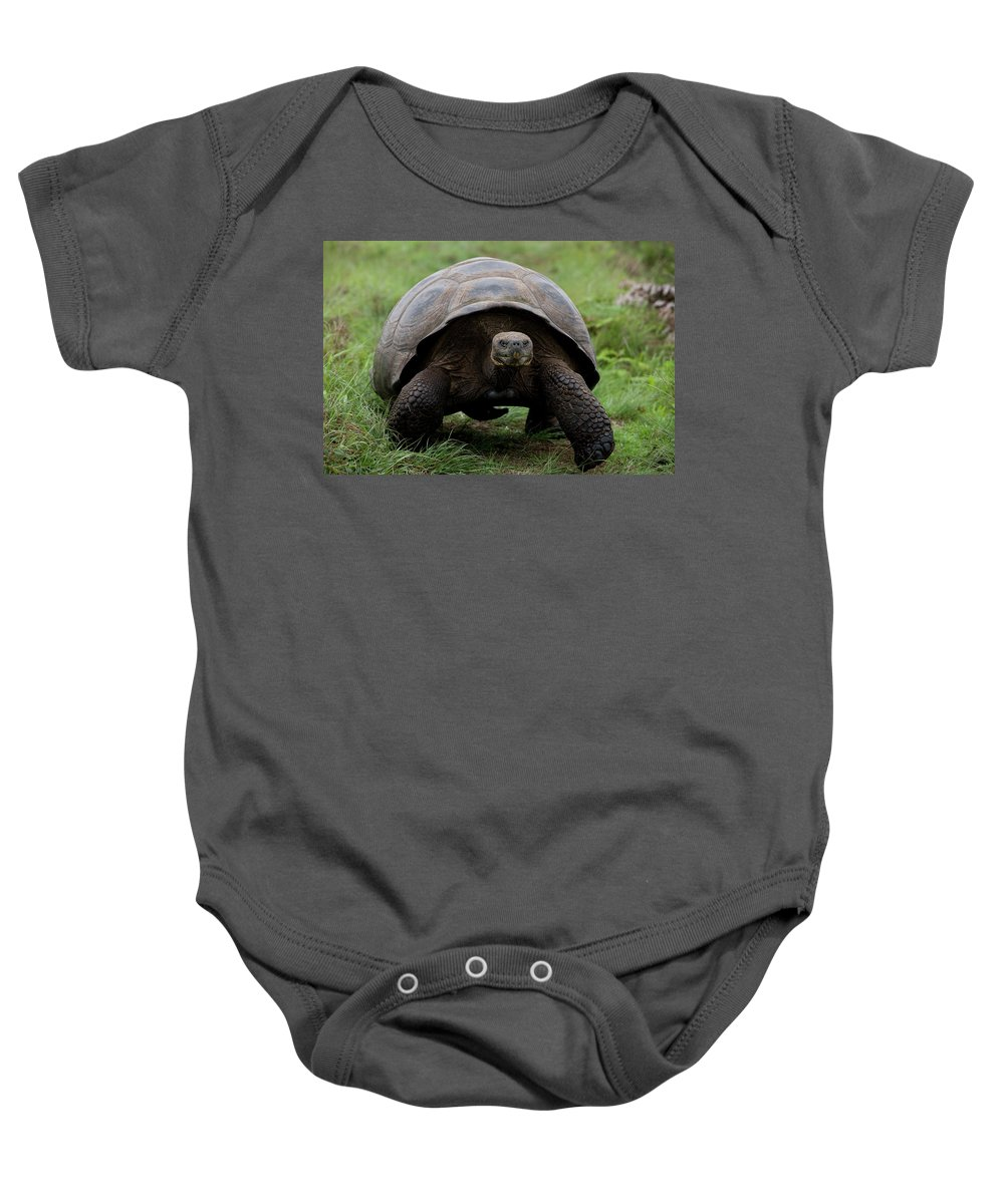 Animal Baby Onesie featuring the photograph A Giant Tortoise Walks Along The Rim by Eric Rorer