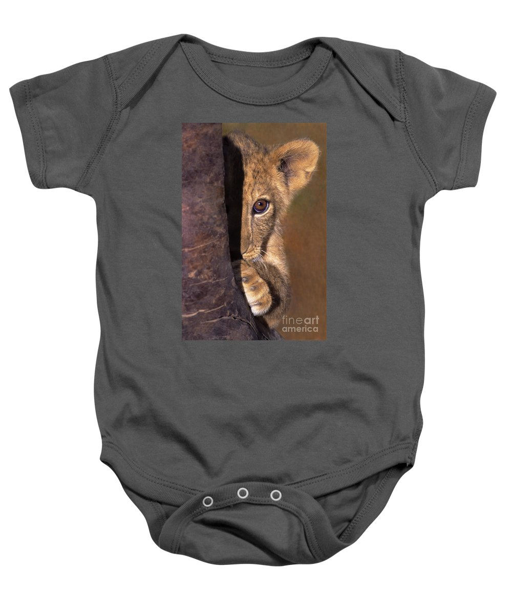 African Lion Baby Onesie featuring the photograph A Lion Cub Plays Hide And Seek Wildlife Rescue by Dave Welling