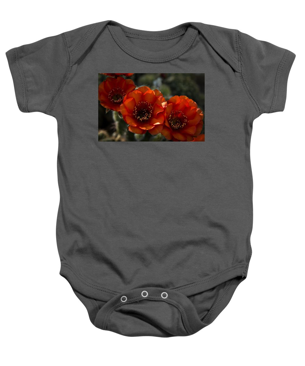 Red Torch Cactus Baby Onesie featuring the photograph A Trio Of Red by Saija Lehtonen