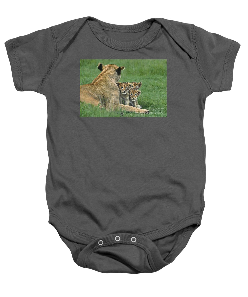 Africa Baby Onesie featuring the photograph African Lion Cubs Study The Photographer Tanzania by Dave Welling