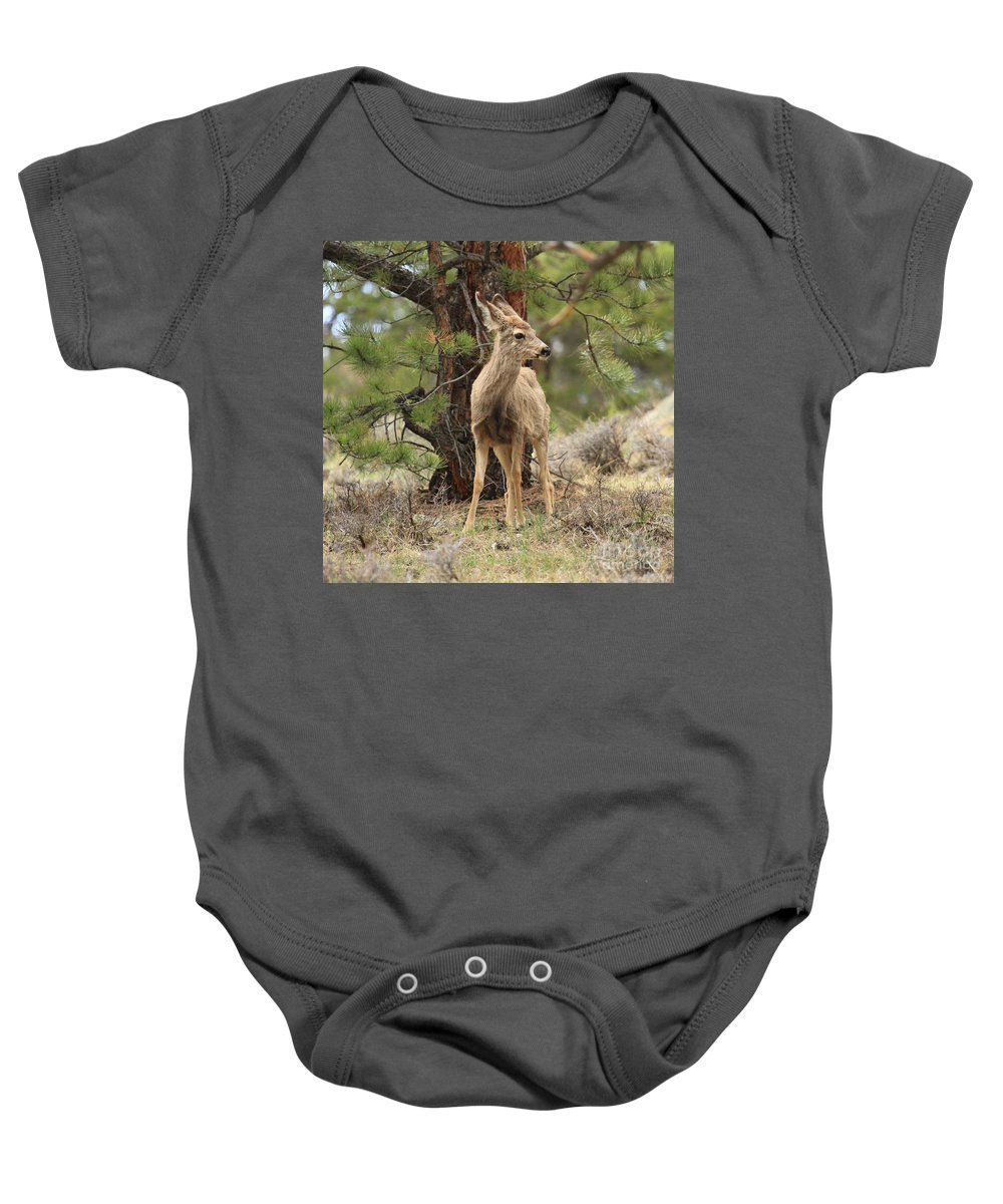 Rocky Mountain National Park Baby Onesie featuring the photograph Alert In The Rockies by Adam Jewell