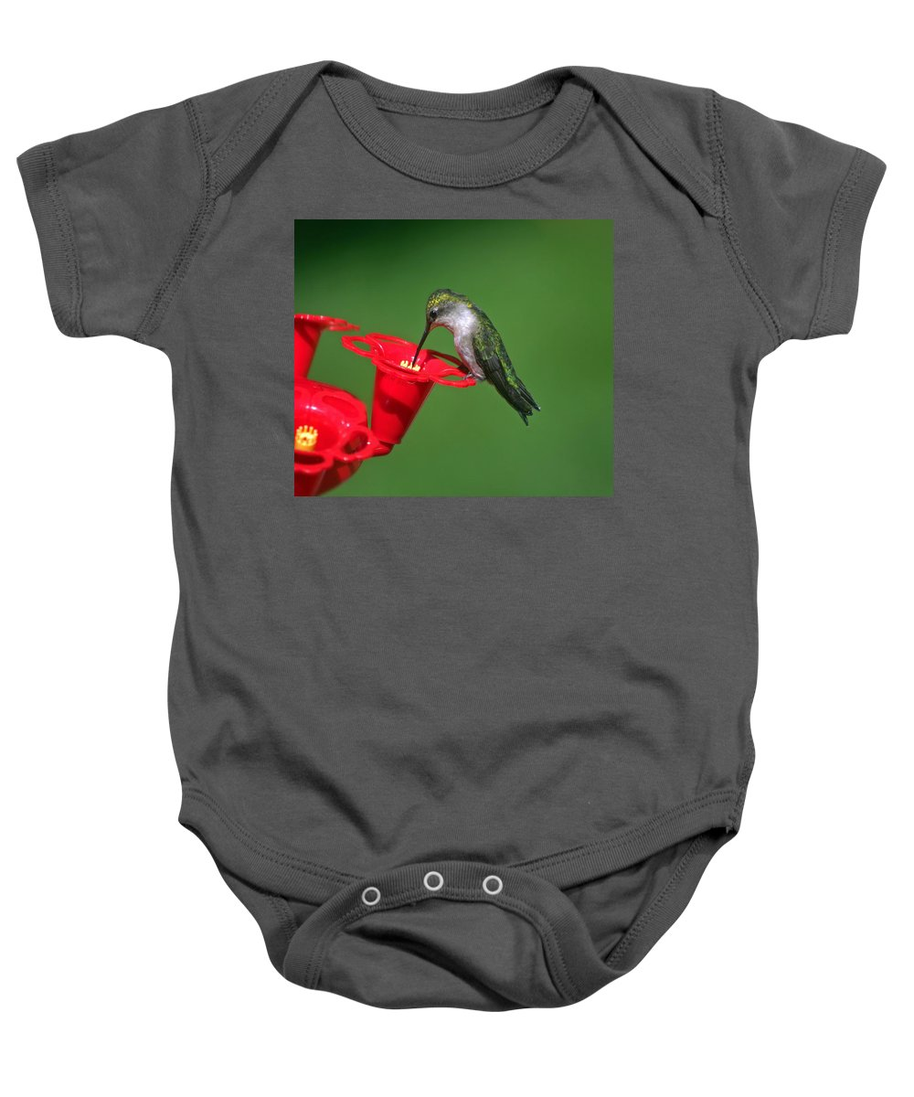 Female Hummingbird Baby Onesie featuring the photograph Alone At Last by Catherine Melvin