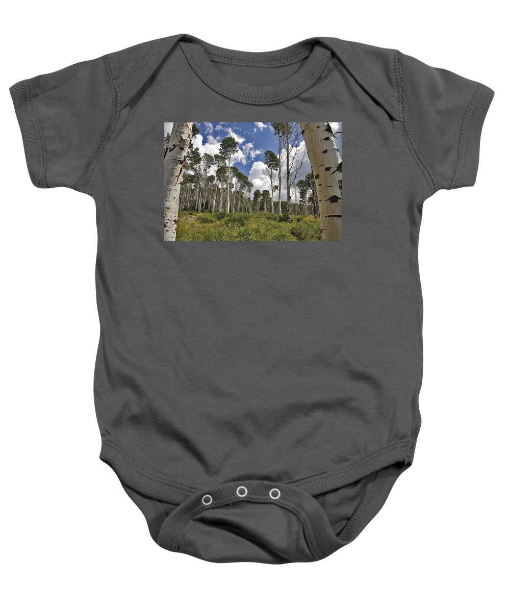 3scape Baby Onesie featuring the photograph Aspen Grove by Adam Romanowicz