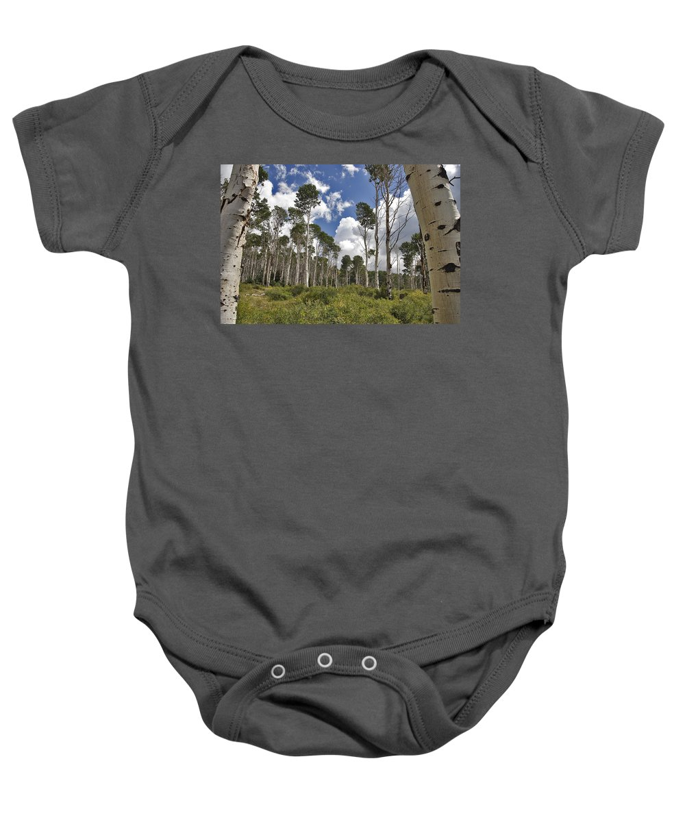 3scape Photos Baby Onesie featuring the photograph Aspen Grove by Adam Romanowicz