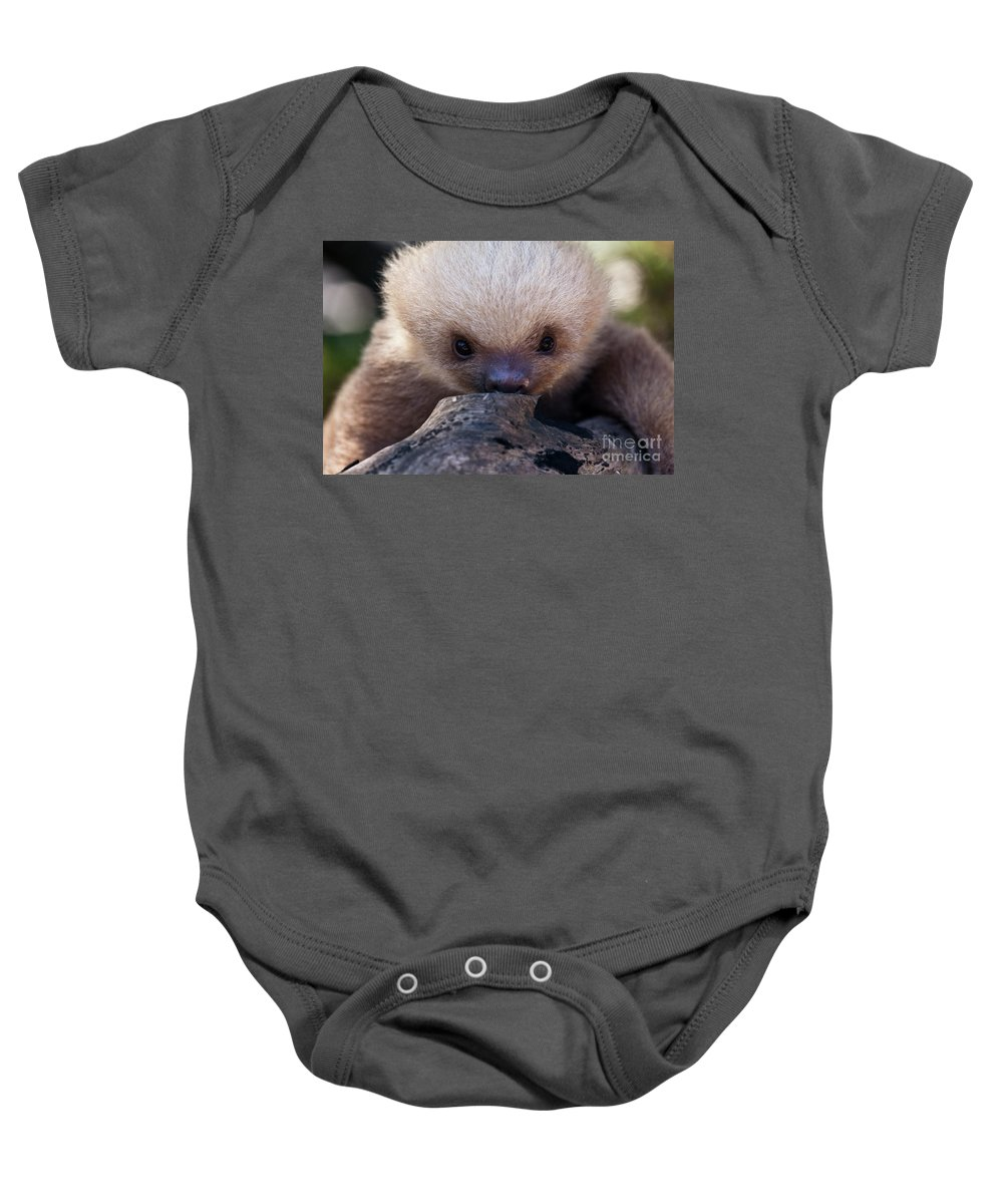 Sloth Baby Onesie featuring the photograph Baby Sloth 2 by Heiko Koehrer-Wagner