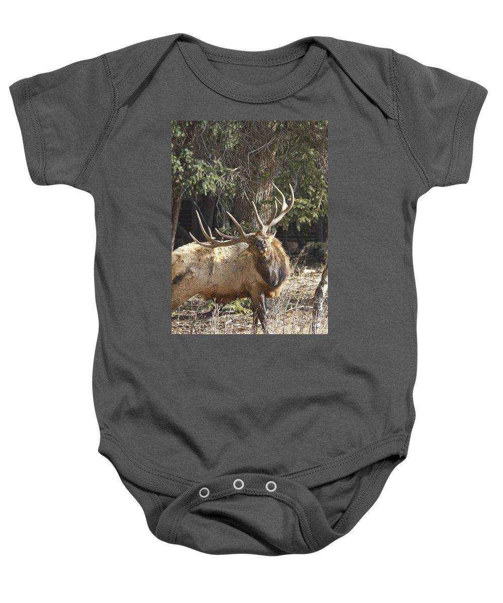 Elk Baby Onesie featuring the photograph Back Scratcher by Shane Bechler