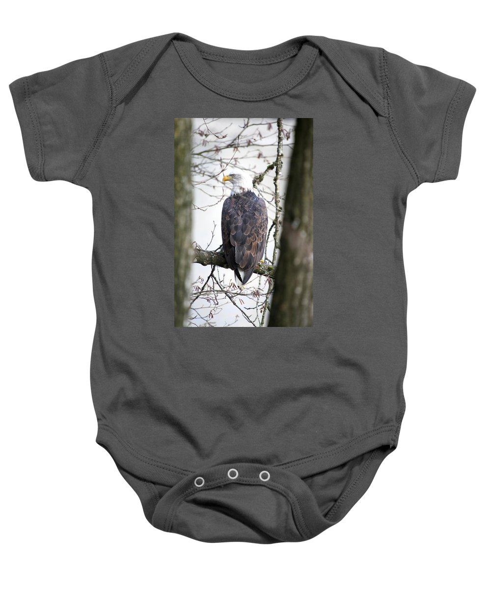 Bald Eagle Baby Onesie featuring the photograph Bald Eagle by Ian Mcadie