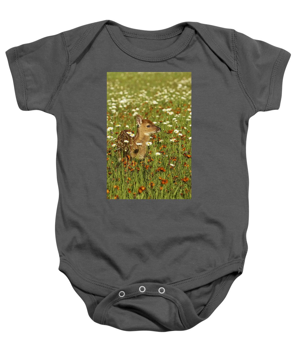 Fawn Baby Onesie featuring the photograph Bambi 2 by Jack Milchanowski