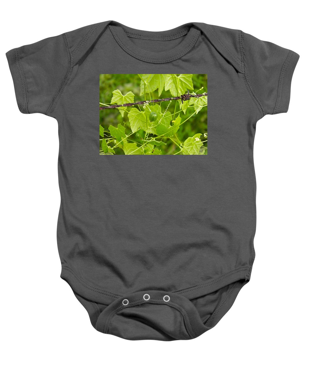 Vine Baby Onesie featuring the photograph Barbwire And Vine by Nick Kirby