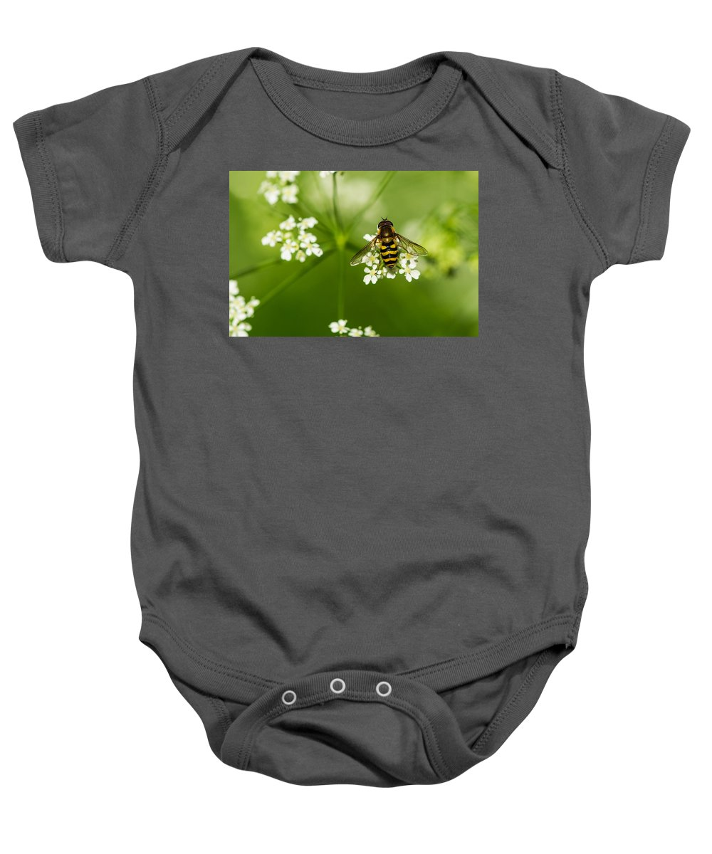 Adorable Baby Onesie featuring the photograph Bee On Top Of The Flower - Featured 3 by Alexander Senin