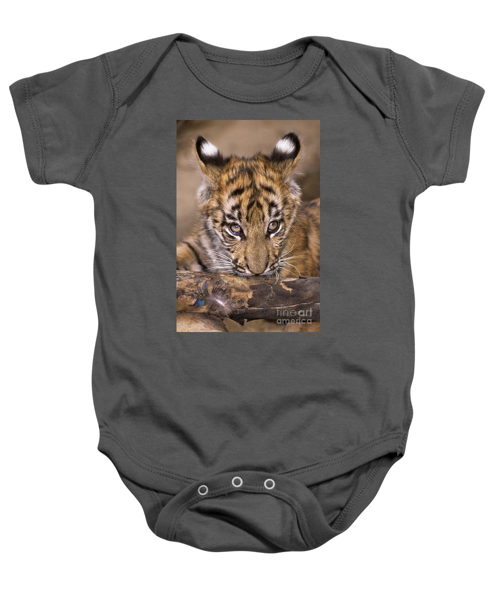 Bengal Tiger Baby Onesie featuring the photograph Bengal Tiger Cub And Peacock Feather Endangered Species Wildlife Rescue by Dave Welling