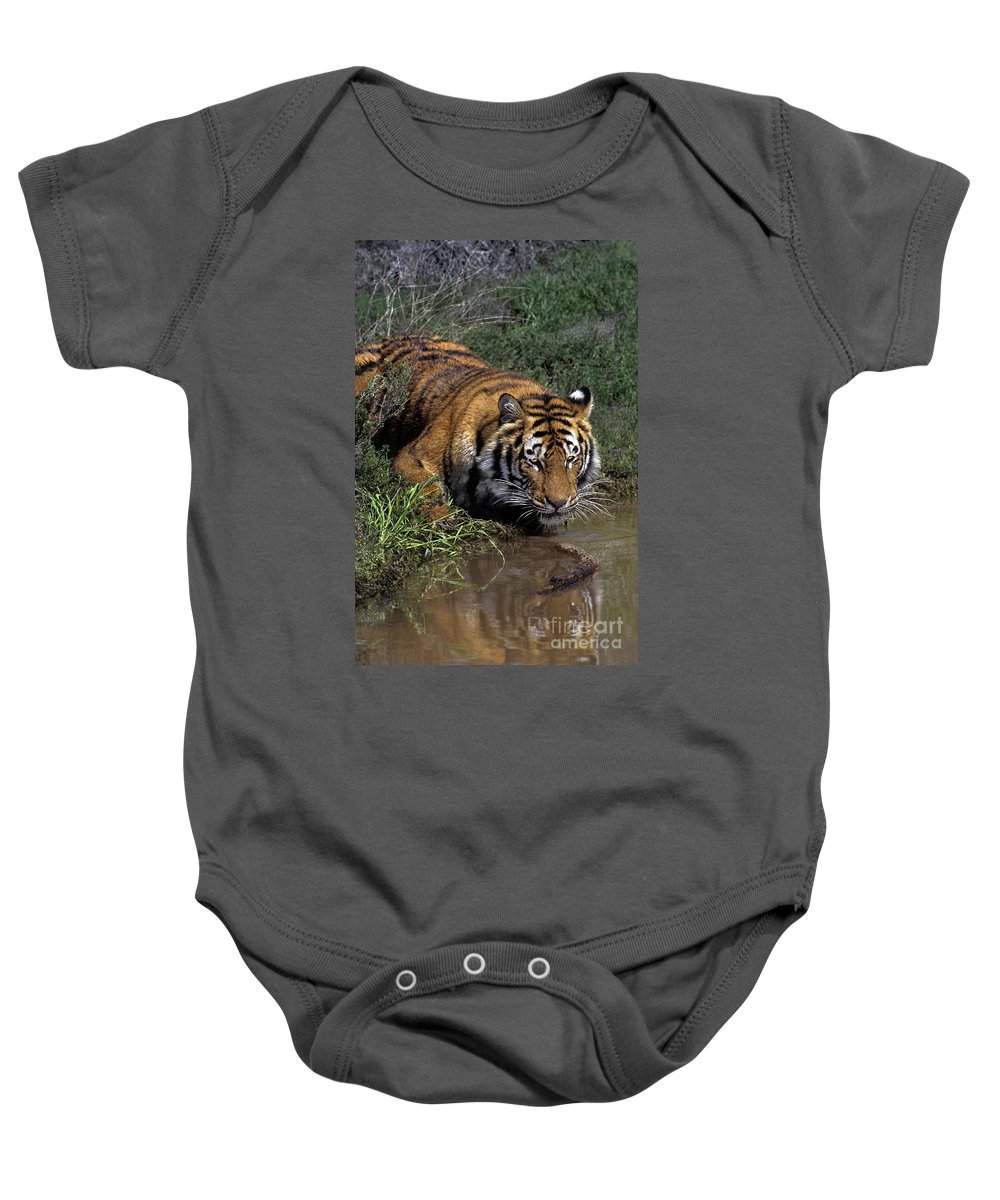 Bengal Tiger Baby Onesie featuring the photograph Bengal Tiger Drinking At Pond Endangered Species Wildlife Rescue by Dave Welling