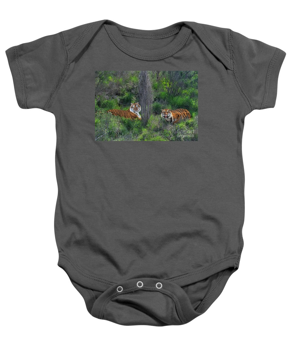 Bengal Tigers Baby Onesie featuring the photograph Bengal Tigers On Grassy Hillside Endangered Species Wildlife Rescue by Dave Welling