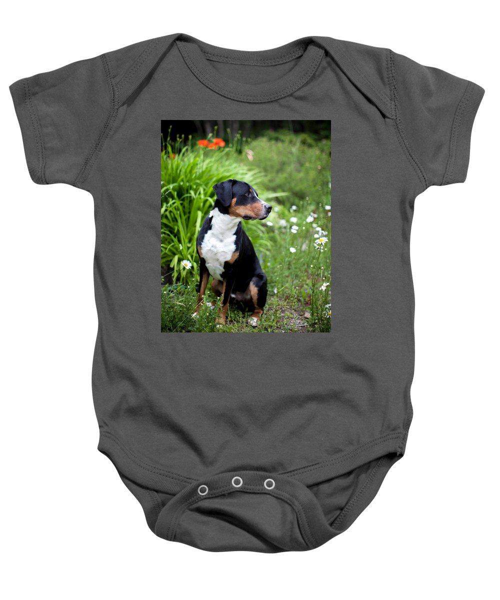 Dog Baby Onesie featuring the photograph Bennett In The Garden by Aaron Aldrich