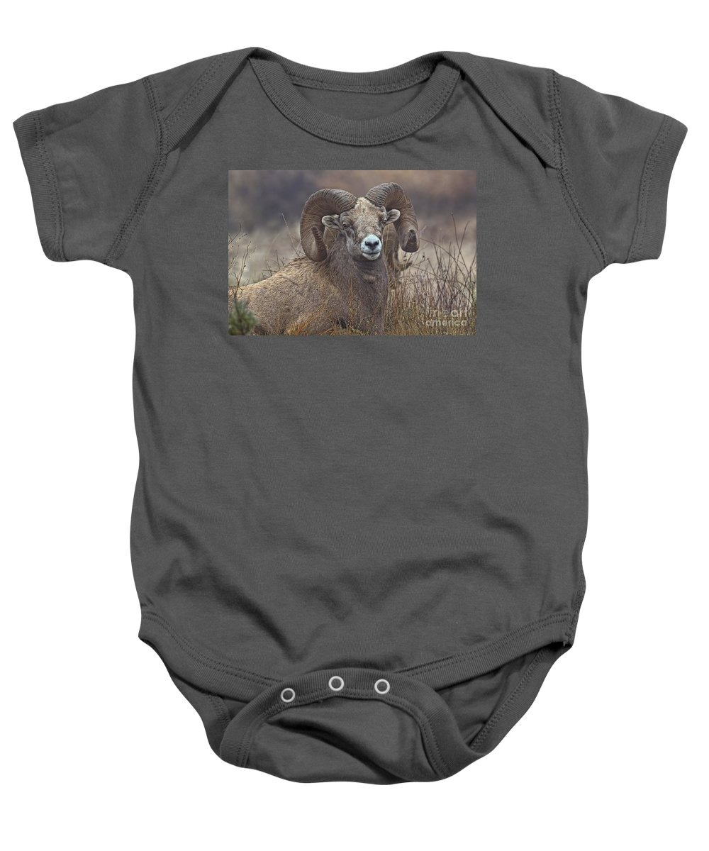 Columbia Valley Baby Onesie featuring the photograph Big Rams by James Anderson