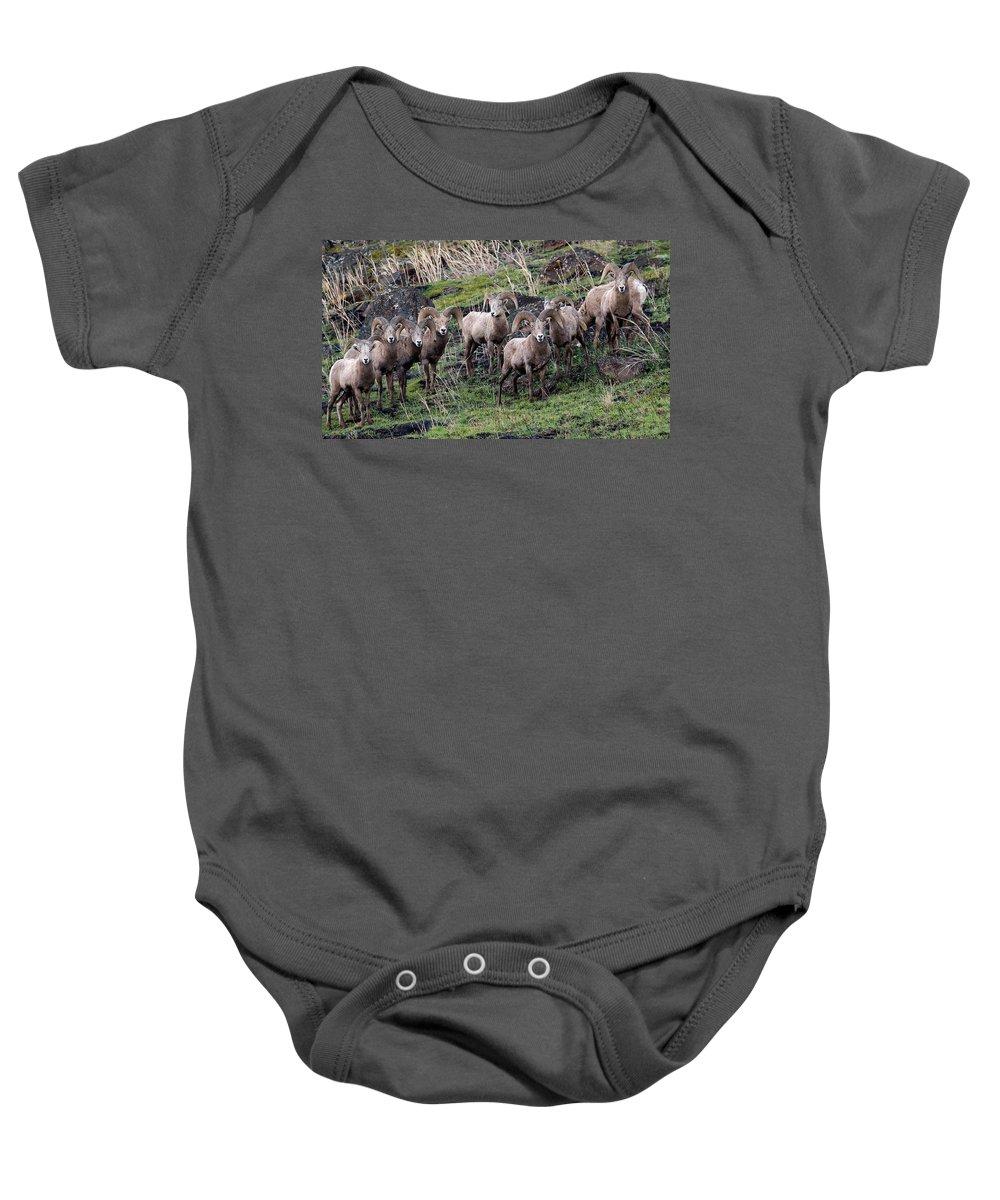 Bighorn Sheep Baby Onesie featuring the photograph Bighorn Reunion by Steve McKinzie