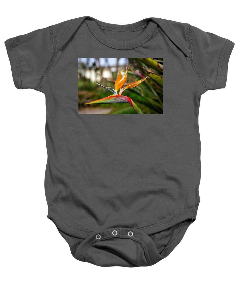 Bird Of Paradise Baby Onesie featuring the photograph Bird Of Paradise by Dave Files