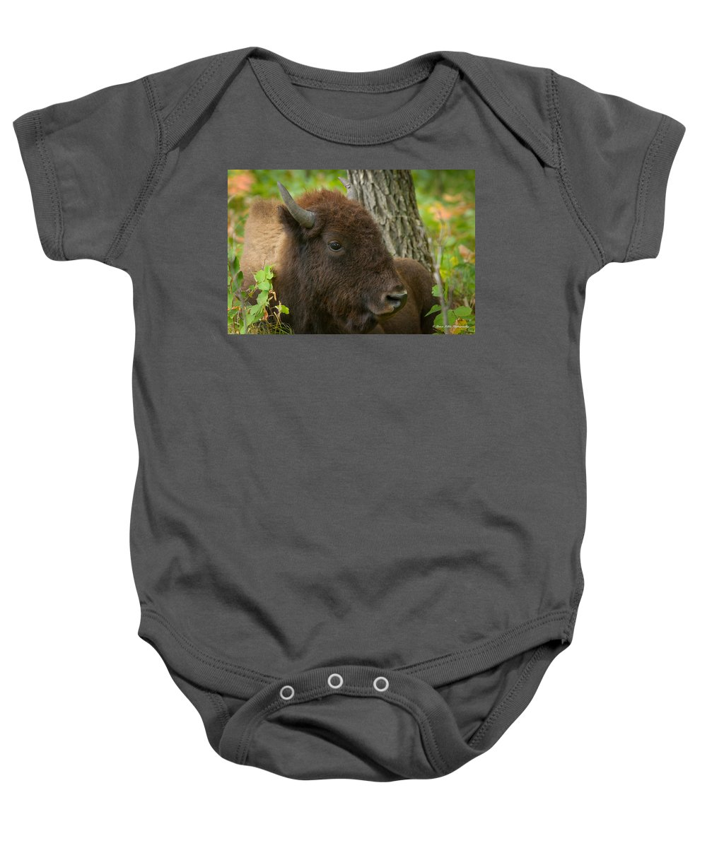 Wildlife Baby Onesie featuring the photograph Bison Resting by Bruce Nikle