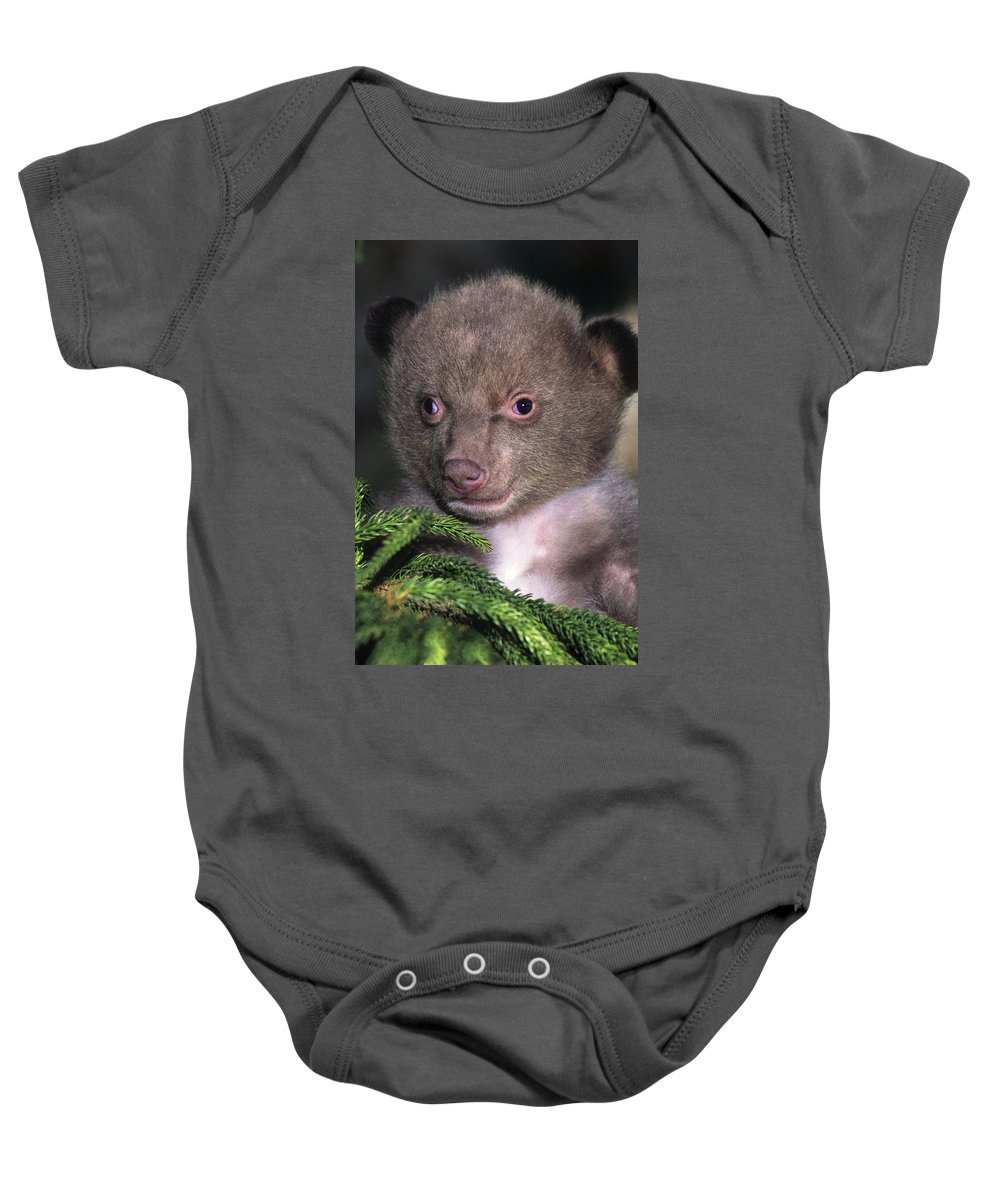 Black Bear Baby Onesie featuring the photograph Black Bear Cub Portrait Wildlife Rescue by Dave Welling