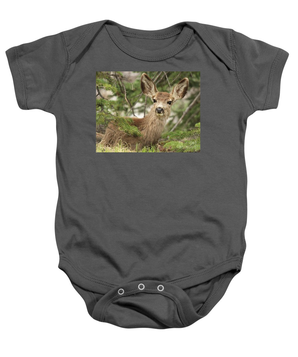 Rocky Mountain National Park Baby Onesie featuring the photograph Blending In The Pines by Adam Jewell
