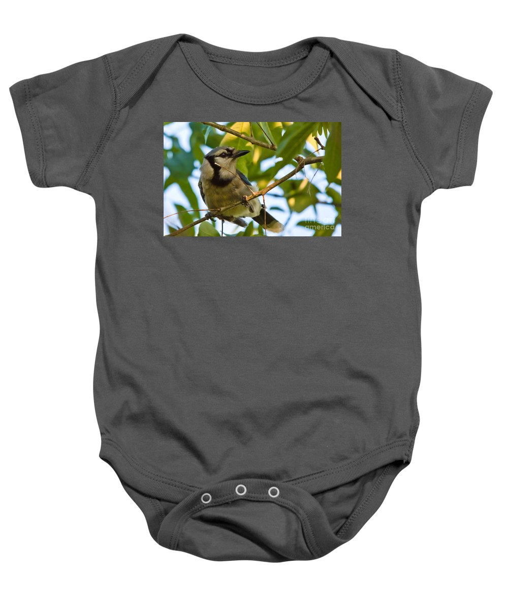 Blue Jay Baby Onesie featuring the photograph Blue Jay In Hiding by Cheryl Baxter