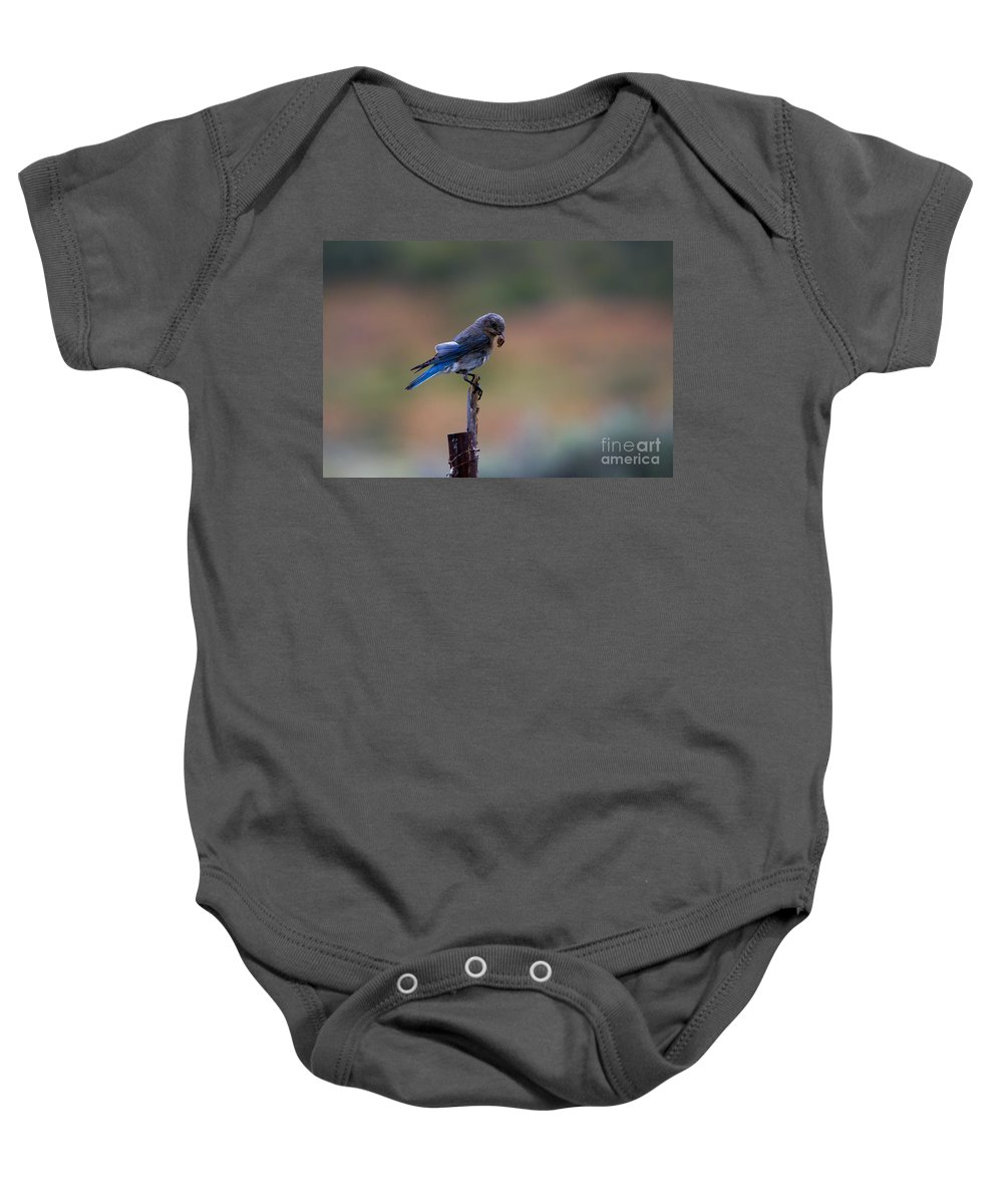 Mountain Bluebird Baby Onesie featuring the photograph Bluebird Lunch by Mike Dawson