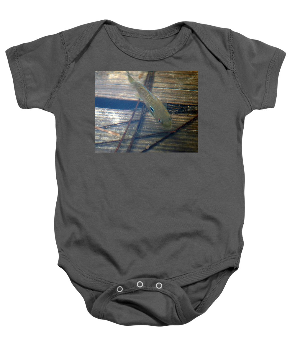 A Bluegilled Brim Red Eye At Lake Seminole Going After Minnows To Eat Baby Onesie featuring the photograph Bluegill On The Hunt by Kim Pate