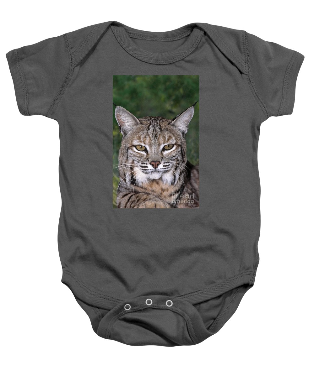 Bobcat Baby Onesie featuring the photograph Bobcat Portrait Wildlife Rescue by Dave Welling