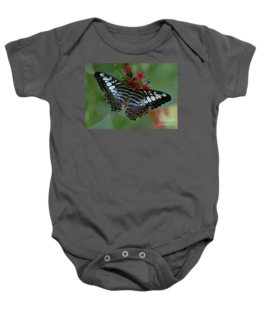 Butterfly Baby Onesie featuring the photograph Bold And Beautiful by Bob Christopher