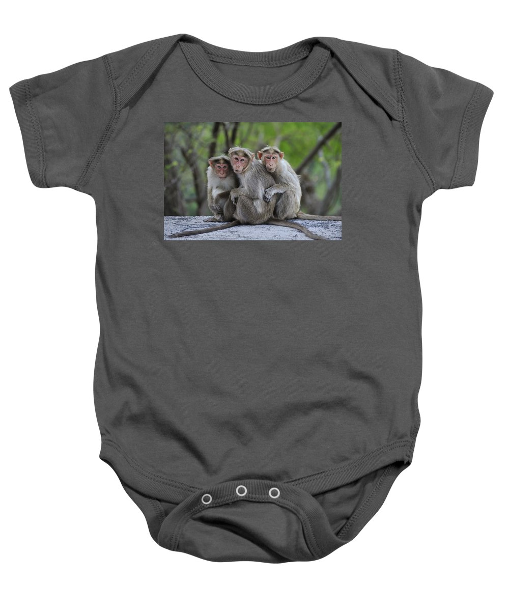 Thomas Marent Baby Onesie featuring the photograph Bonnet Macaque Trio Huddling India by Thomas Marent