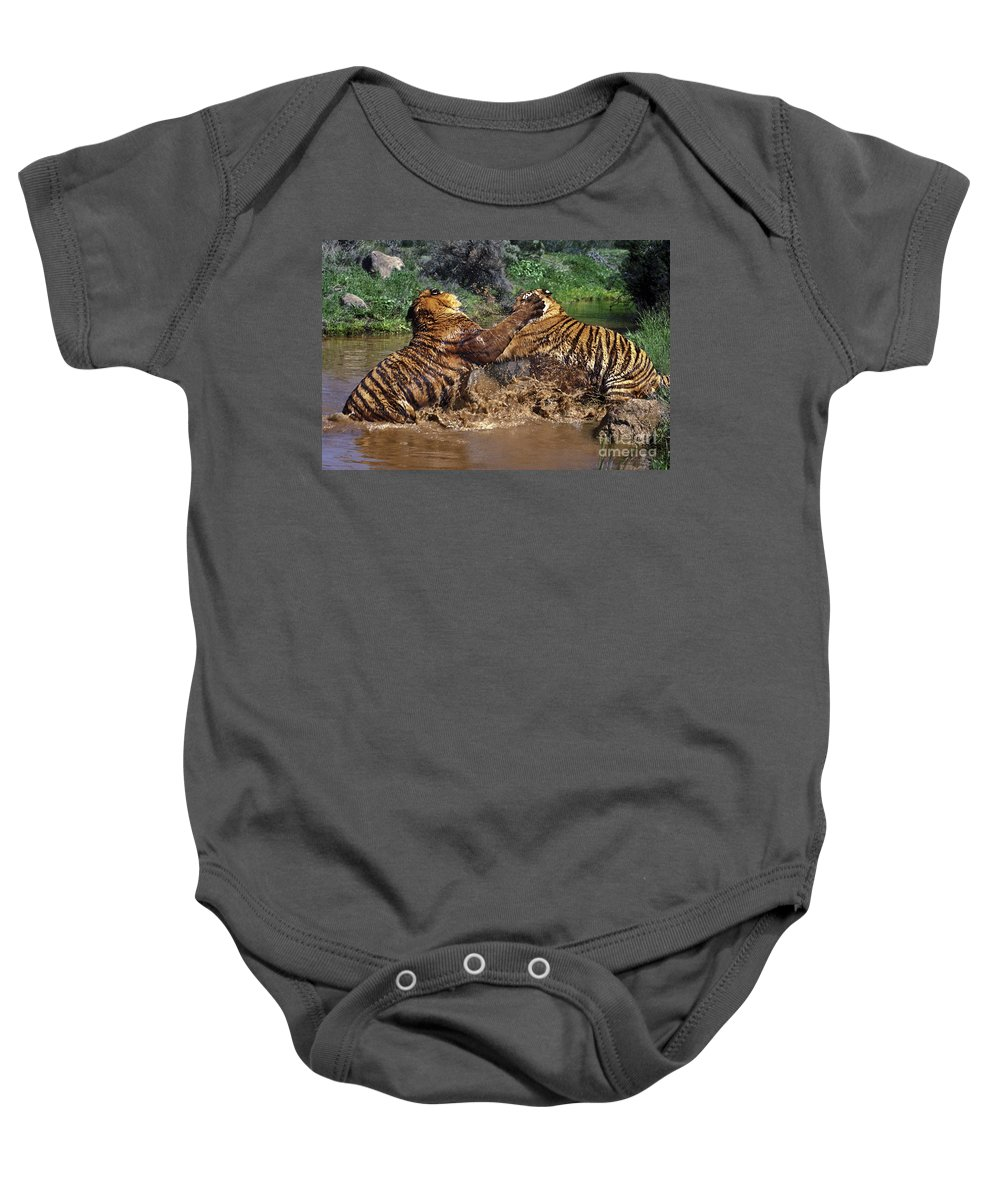 Bengal Tigers Baby Onesie featuring the photograph Boxing Bengal Tigers Wildlife Rescue by Dave Welling